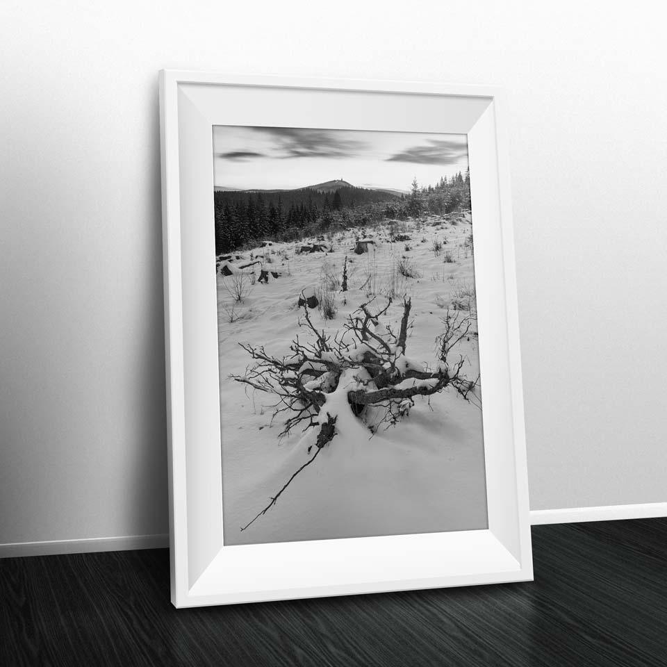 fotografie na zeď